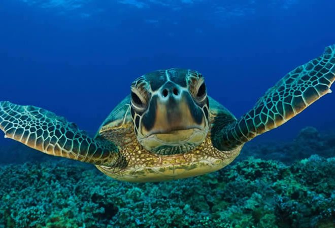 huatulco-sea-turtle